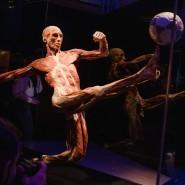 Выставка «BODY WORLDS. Мир тела» фотографии