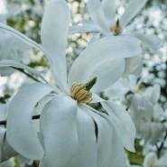 Весенний фестиваль цветов в «Аптекарском огороде» 2021 фотографии