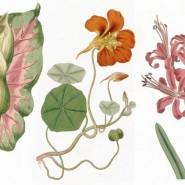Выставка «Любовь растений» фотографии