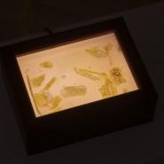 Выставка Томоко Ходжо «Засыпай» фотографии