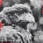 Выставка «Глядя на птиц» фотографии