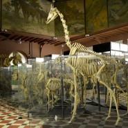Онлайн-трансляции Зоологического музея 2020 фотографии