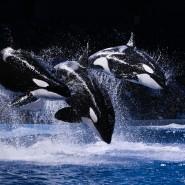 Мультипликационное «Шоу Воды» с участием морских животных в Москвариуме фотографии