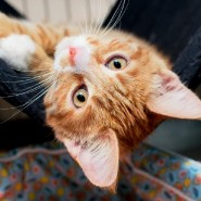 Выставка кошек «Неслучайная встреча» фотографии