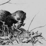 Выставка «Лесной детектив» фотографии