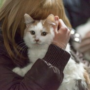 Выставка «Каждой кошке нужен дом» фотографии