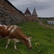 Выставка «Соловецкие острова» фотографии