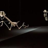 Выставка «Animatus» фотографии