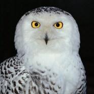Выставка «Портреты животных» фотографии
