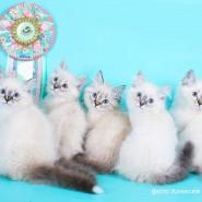 Выставка-продажа котят «КоШарики Шоу» фотографии