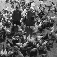 Выставка «Михаил Прехнер. Новые поступления всобрание музея» фотографии