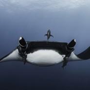 Фестиваль подводной фотографии «Дикий подводный мир» 2021 фотографии