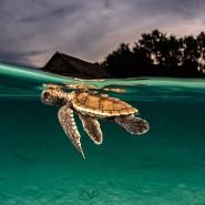 Фестиваль «Золотая черепаха» 2018 фотографии