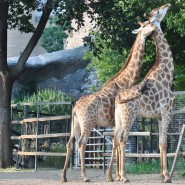 Открытие Московского зоопарка 2020 фотографии