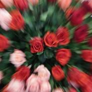 Выставка «Цветы/Flowers-IPM» фотографии