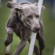 Выставка «Гений в собачьей шкуре» фотографии