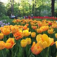 Весенний фестиваль цветов в «Аптекарском огороде» 2018 фотографии
