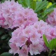 XVII Весенний фестиваль цветов в «Аптекарском огороде» фотографии