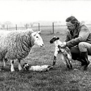 Выставка «Бестселлеры от сельского ветеринара» фотографии