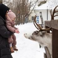 Новогодние Ёлки на Городской Ферме на ВДНХ 2020/2021 фотографии