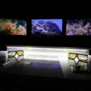 Выставка «Коралловый риф – от планктона до акул» фотографии