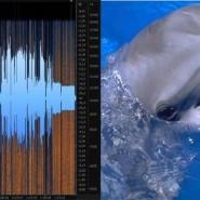 Выставка «Транскрипция шума» фотографии