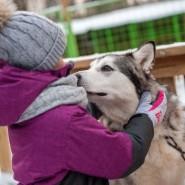 Питомник ездовых собак «Северный» фотографии
