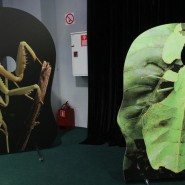 Выставка «Гении маскировки. Мимикрия: исчезнуть, чтобы выжить» фотографии