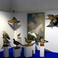 Выставка «Соколиная охота. Царская потеха с ловчими птицами» фотографии