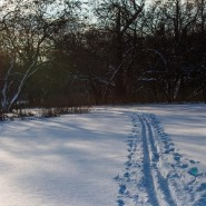 Лыжня в парке «Останкино» 2016 фотографии