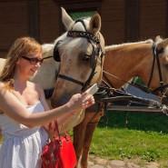 День лошади в Коломенском 2016 фотографии