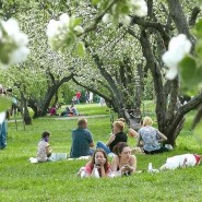 Выставка «Яблочный рай» фотографии