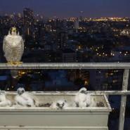 Выставка «Осторожно: город!» фотографии