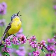 Международный день птиц «Пернатый выходной» 2017 фотографии