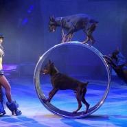 Цирковое шоу «Эпицентр мира» 2018 фотографии