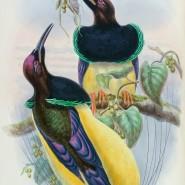 Выставка «Остров папуасов и райских птиц» фотографии