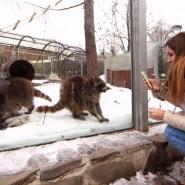 Татьянин день в Московском зоопарке 2019 фотографии