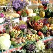 Праздник Урожая на Летнем рынке «Фермерия» фотографии