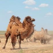 Выставка «Жизнь в песках» фотографии