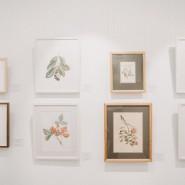 Выставка «Оживший цветок Панацеи. Лекарственные растения мира» фотографии