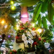 Выставка орхидей в «Аптекарском огороде» 2021 фотографии