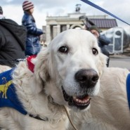 Акция «День с собакой-проводником» 2019 фотографии