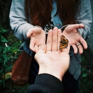 Московский дом бабочек фотографии