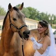 Загородный конный комплекс «Созидатель» фотографии
