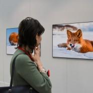 Фестиваль «Первозданная Россия» 2020 фотографии