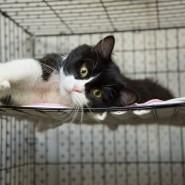 Выставка кошек в добрые руки «Неслучайная встреча» фотографии