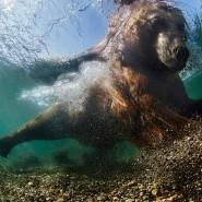 Фестиваль подводной фотографии «Дикий подводный мир» 2016 фотографии