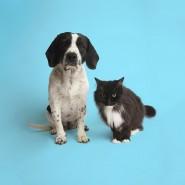 Дни открытых дверей в приютах для кошек и собак 2018 фотографии