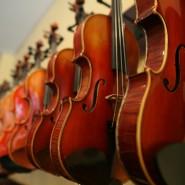 Выставка «Тайны скрипичного леса» фотографии
