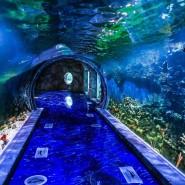 Крокус Сити Океанариум фотографии